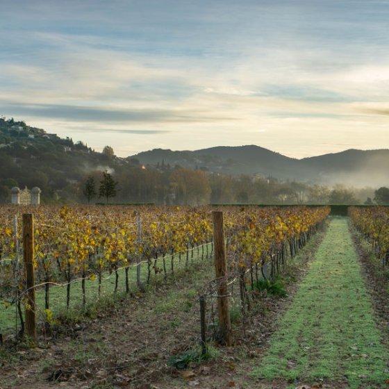 300 ha de vignes. AOP Côtes de Provence Pierrefeu